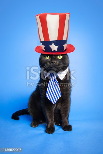 490776989 istock photo Patriotic Cat in Hat on Blue 1156522027