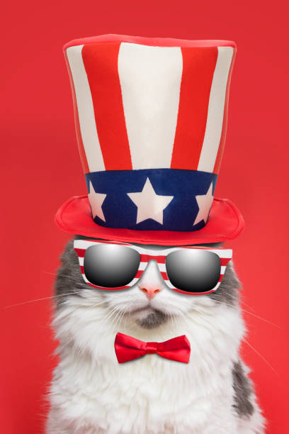 Patriotic Cat in Sunglasses and Hat A beautiful white and gray cat dressed in an American flag hat and wearing a red bowtie. sdominick stock pictures, royalty-free photos & images