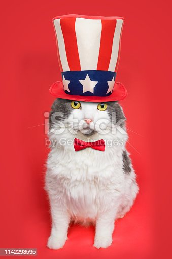 490776989 istock photo Patriotic Cat 1142293595