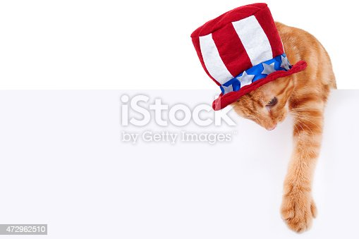 490776989 istock photo Patriotic Cat Sign 472962510