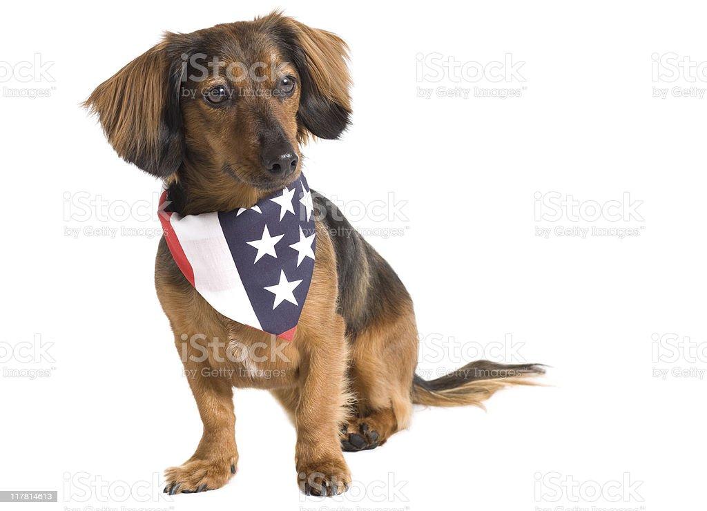 Patriotic Doggy stock photo