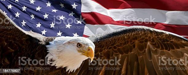 Patriotic eagle picture id184776807?b=1&k=6&m=184776807&s=612x612&h=8lotadvlzndebr7zo8s5m7lscvc07zkx5d7ohwyqk6a=