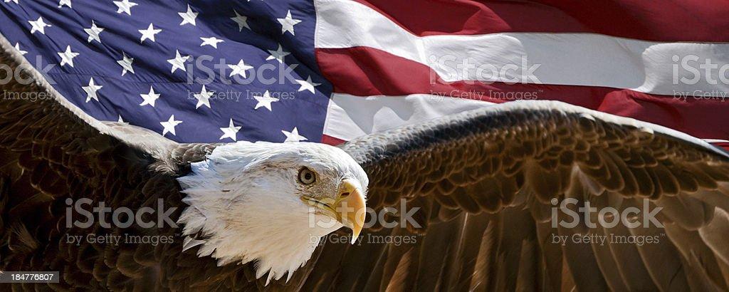 Patriótica estadounidense eagle - foto de stock