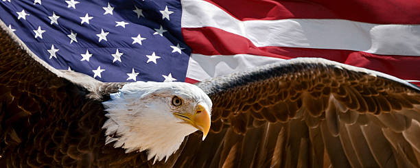 patriotic eagle - eagle stock photos and pictures