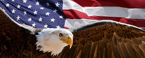 Patriotique d'aigle - Photo