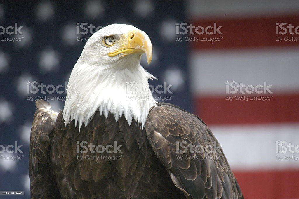 Patriotic Eagle stock photo