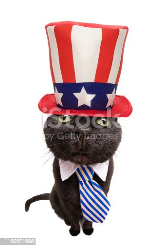 490776989 istock photo Patriotic Fisheye Cat in Tie and Big Hat 1156521998