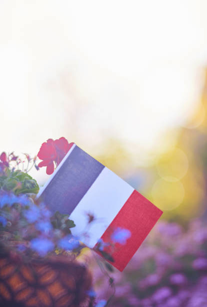 Patriotic French flag background with flowers and sun flare stock photo