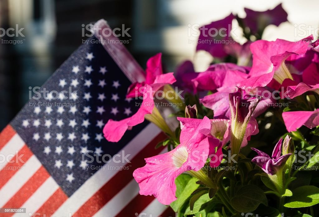 revolutionary petunias analysis The nature of this flower is to bloom rebellious living against the elemental crush a song of color blooming gloriously for its self revolutionary petunia.