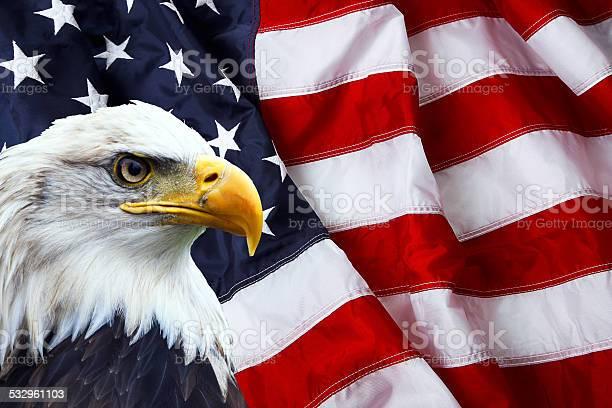 Patriotic north american bald eagle on american flag picture id532961103?b=1&k=6&m=532961103&s=612x612&h=cyga0jrudsv0rbbqzk26xal74sajmfovpn3bkbv6vbk=