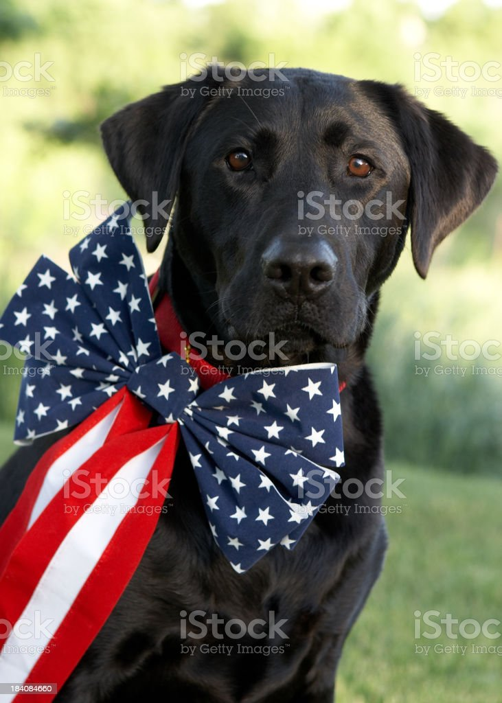 Patriotic Party Animal stock photo