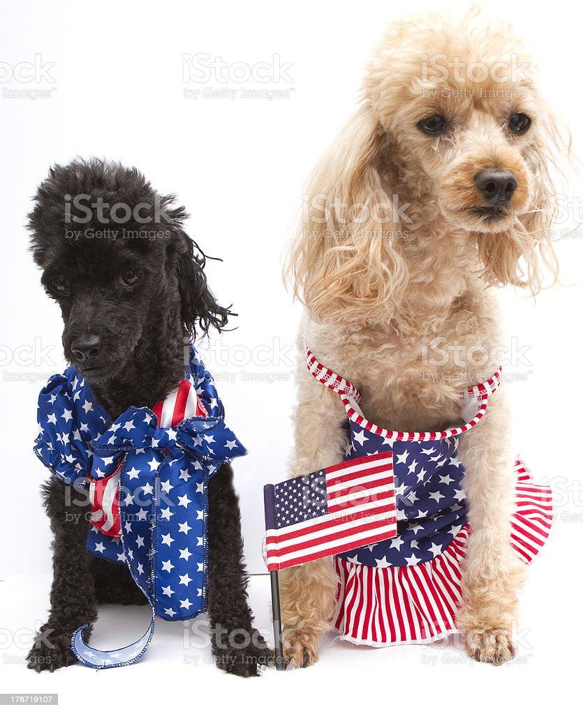 Patriotic Pooches stock photo