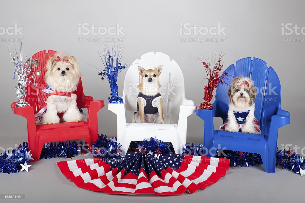 patriotic puppies stock photo