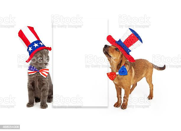 Patriotic puppy and kitten blank sign picture id468054006?b=1&k=6&m=468054006&s=612x612&h=fsnsgjq pr0r4bophzoe1cjmvhmd9kvk jxqsrddgiq=