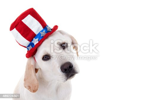 490776989 istock photo Patriotic Puppy Dog 489224301