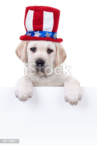 istock Patriotic Puppy Dog Sign 491708071