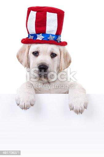 489224301 istock photo Patriotic Puppy Dog Sign 491708071