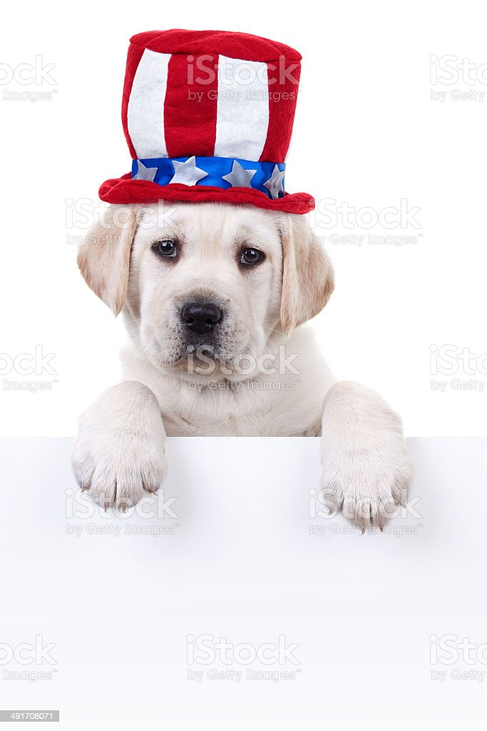 Patriotic Puppy Dog Sign stock photo