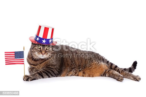 490776989 istock photo Patriotic Tabby Cat 533850466