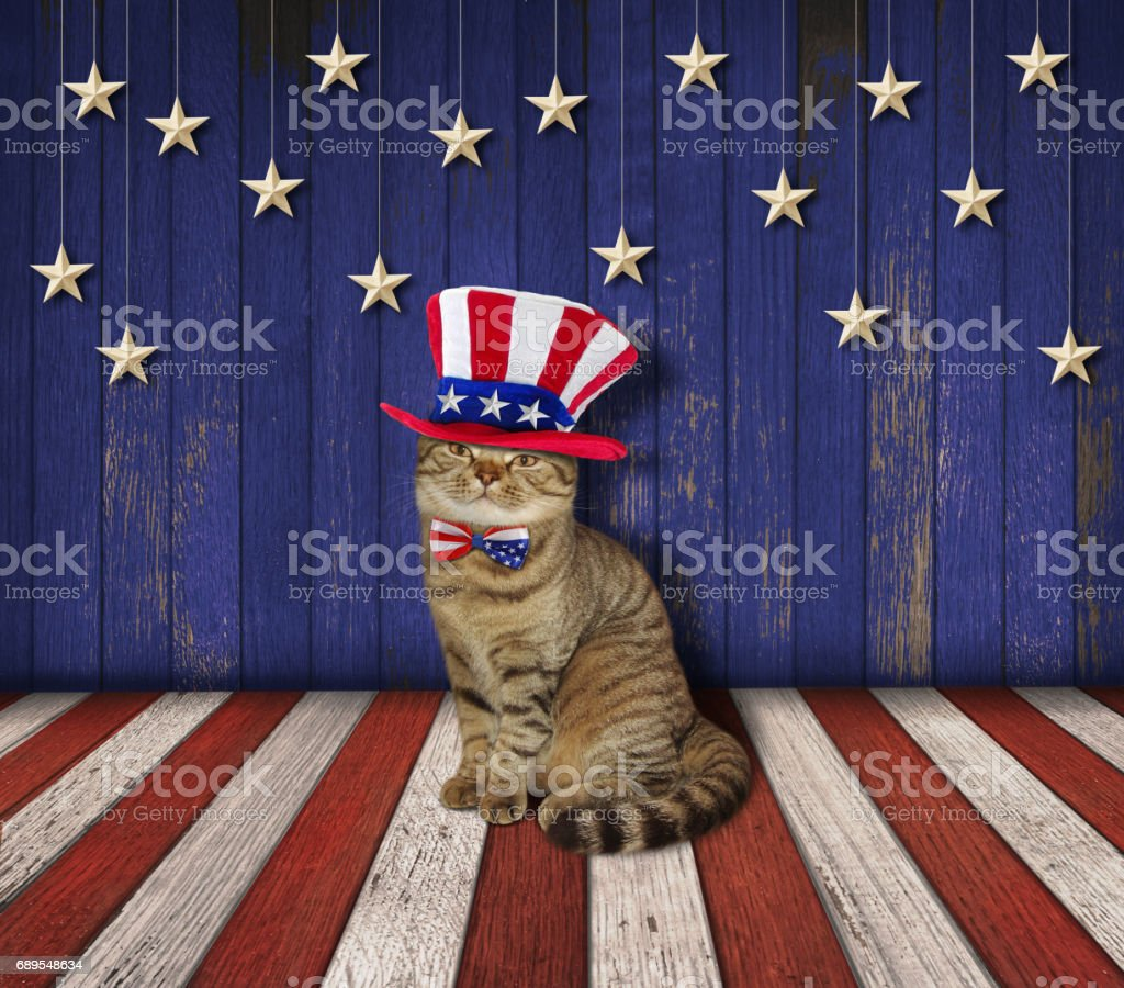 Patriotic wall and cat 1 stock photo