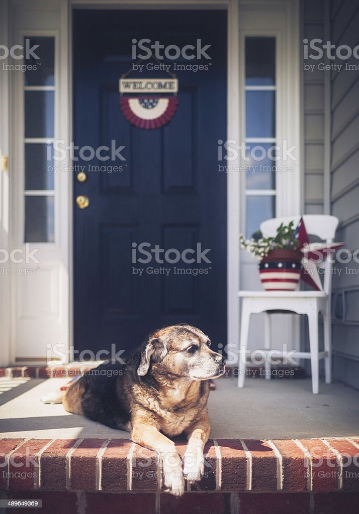 Patriotic Welcome Home with Dog Waiting Patiently stock photo