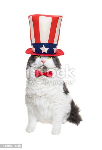 490776989 istock photo Patriotic White and Gray Longhair Cat 1156522045