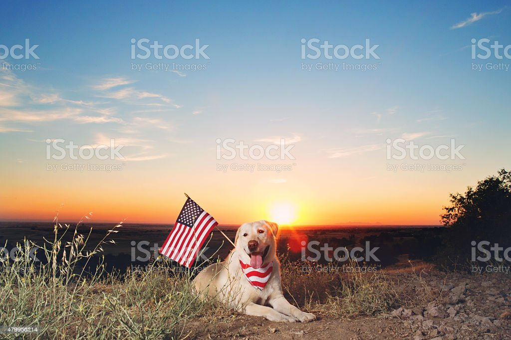 Patriotic Yellow Lab At Sunset stock photo
