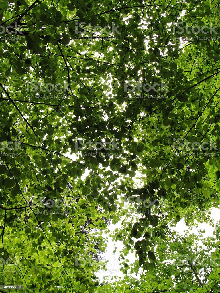 Pattern by Tree stock photo