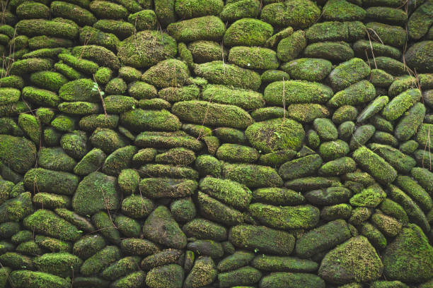Pattern green nature wall forest background with sunlight stock photo