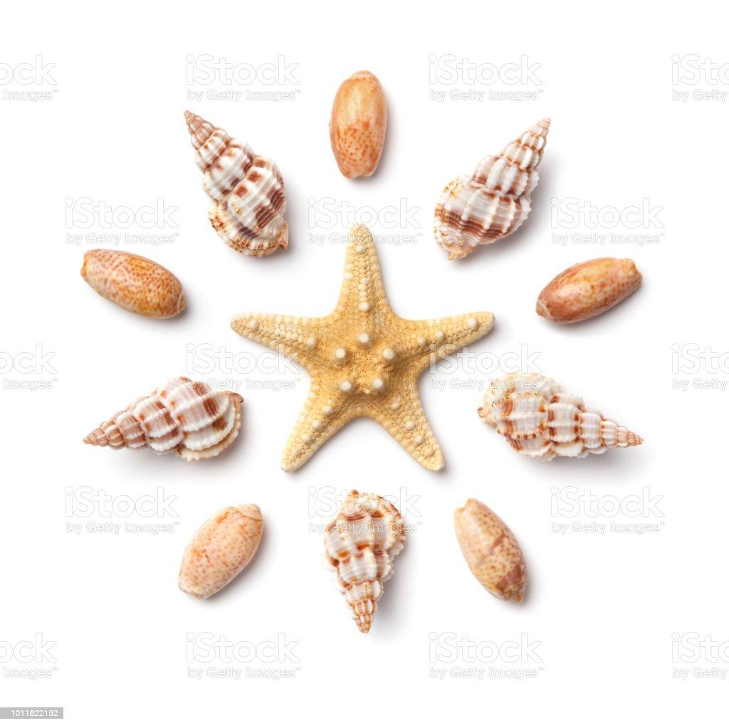 Muster in Form eines Kreises von Muscheln und Seesterne isoliert auf einem weißen Hintergrund. – Foto