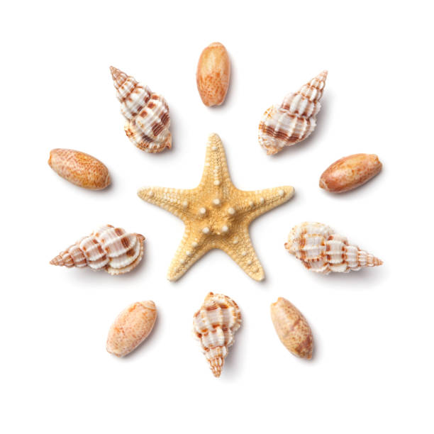 Pattern in the form of a circle of sea shells and starfish isolated on a white background. stock photo