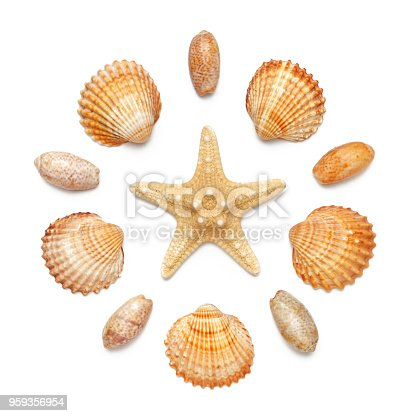 Pattern in the form of a circle of sea shells and starfish, isolated on a white background. Flat lay, top view