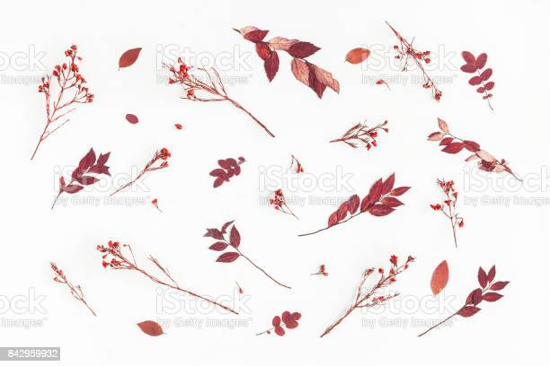 Pattern made of autumn flowers leaves flat lay top view picture id842959932?b=1&k=6&m=842959932&s=612x612&h=vmeapuoi ehvahvnluea1k7fcrsstrkv bci37qtax0=