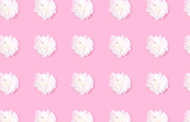 Pattern made of beautiful tender white peony flower head on pink picture id1155876734?b=1&k=6&m=1155876734&s=612x612&w=0&h=grm65phiuqzjlgisq84fog6nzw74prohlv6dbku3db0=