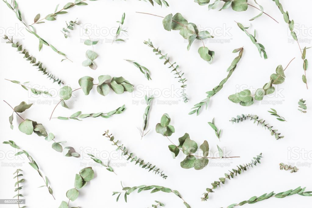 Pattern made of different dried eucalyptus branches. Flat lay stock photo