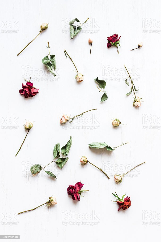 pattern made of dry rose flowers, top view, flat lay stock photo