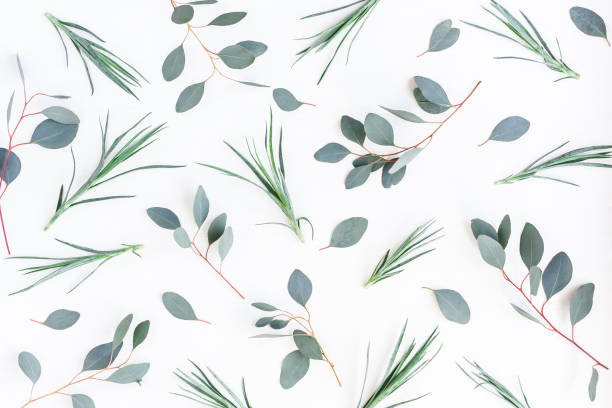 Pattern made of eucalyptus branches. Flat lay, top view stock photo