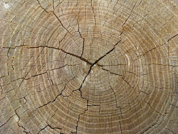 pattern of a cut of a tree - tree logo stock photos and pictures