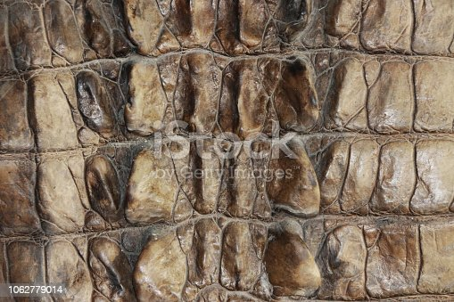 istock Pattern of crocodile leather in brown color. 1062779014