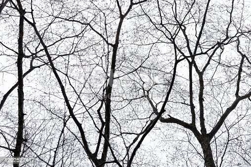 Pattern of dried tree braches texture against white empty sky