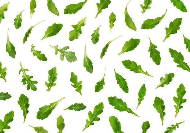 신선한 아루굴라 또는 루콜라 샐러드 잎의 패턴 - 아루굴라 뉴스 사진 이미지