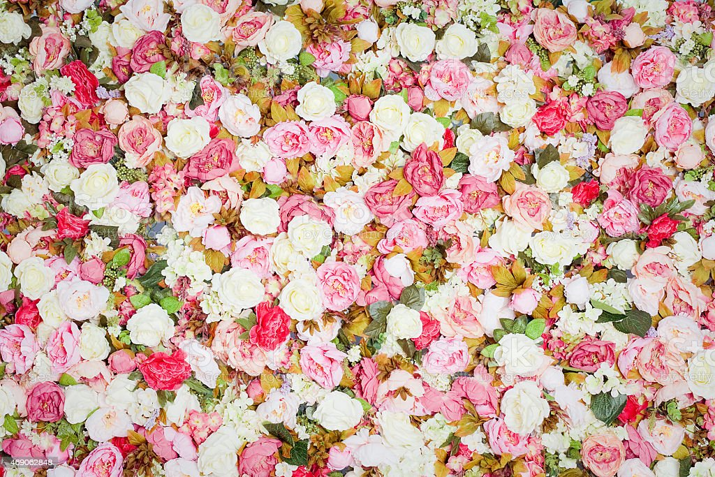 Frische bunte Rosen-Muster – Foto