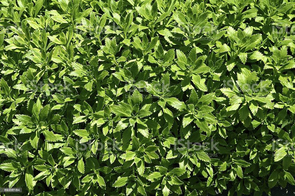 Wzór zielonych roślin zbiór zdjęć royalty-free