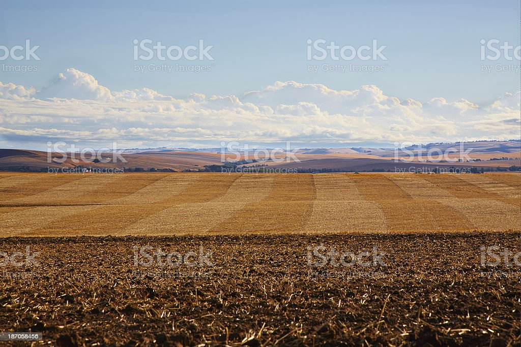 Pattern of Harvested Wheat Fields, Rolling Hill Background royalty-free stock photo