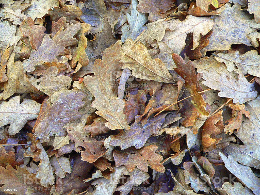 pattern of leaves royalty-free stock photo