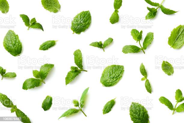 Photo of Pattern of mint leaves