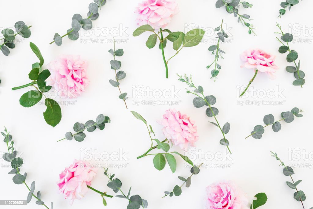 Pattern of pink roses flowers and eucalyptus on white background....