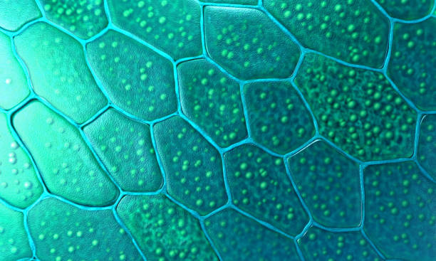 Pattern of plant cells with nucleus and membrane - 3d illustration stock photo