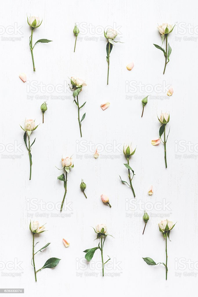 pattern of rose flowers, top view, flat lay stock photo