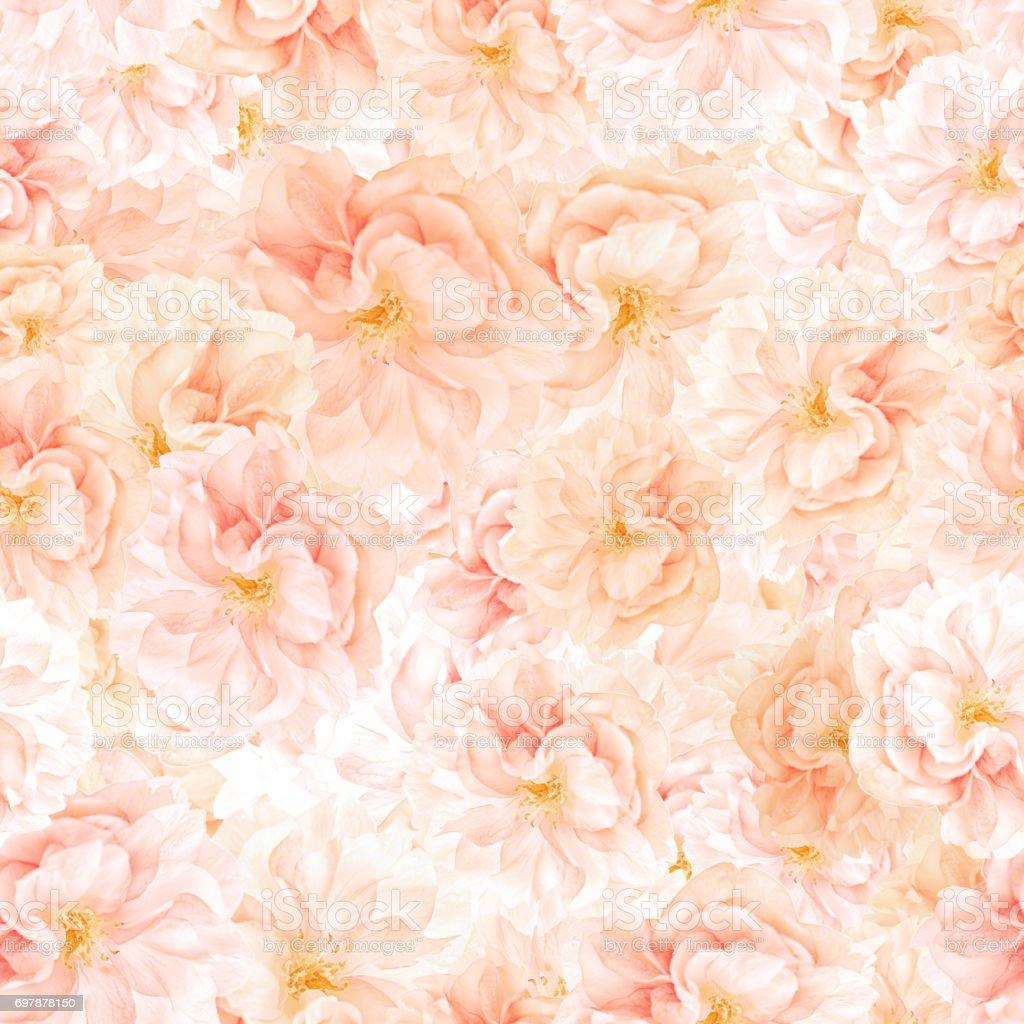 SEAMLESS pattern of sakura blossoms stock photo